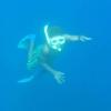 child-underwater-merelava